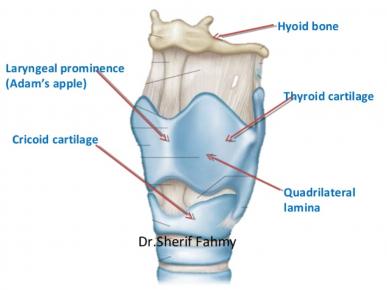 Larynx 400
